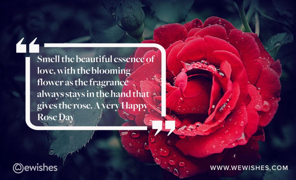 Best Rose Day Quotes, whatsapp quotes