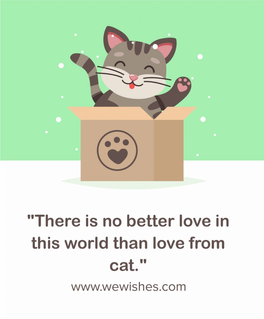 Funny Inspirational Cat Quotes